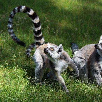 Ausflugsziel Tierpark Bad Pyrmont
