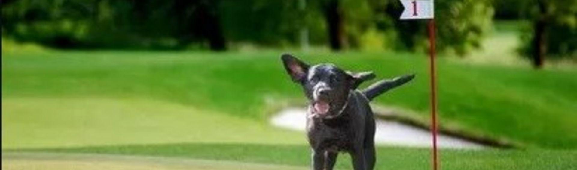 Golfsport mit Hund