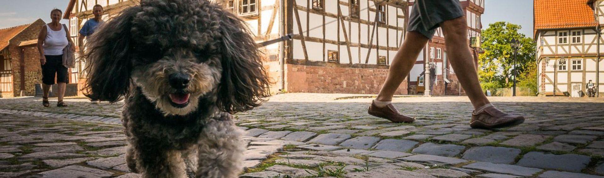 Hessenpark mit Hund in der Nähe von Frankfurt