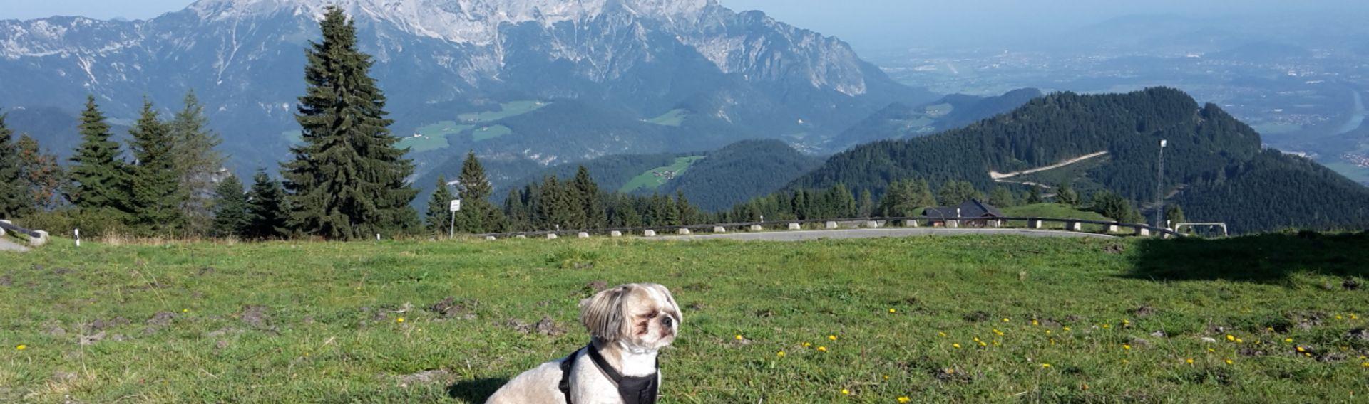 Einreisebestimmungen Hund