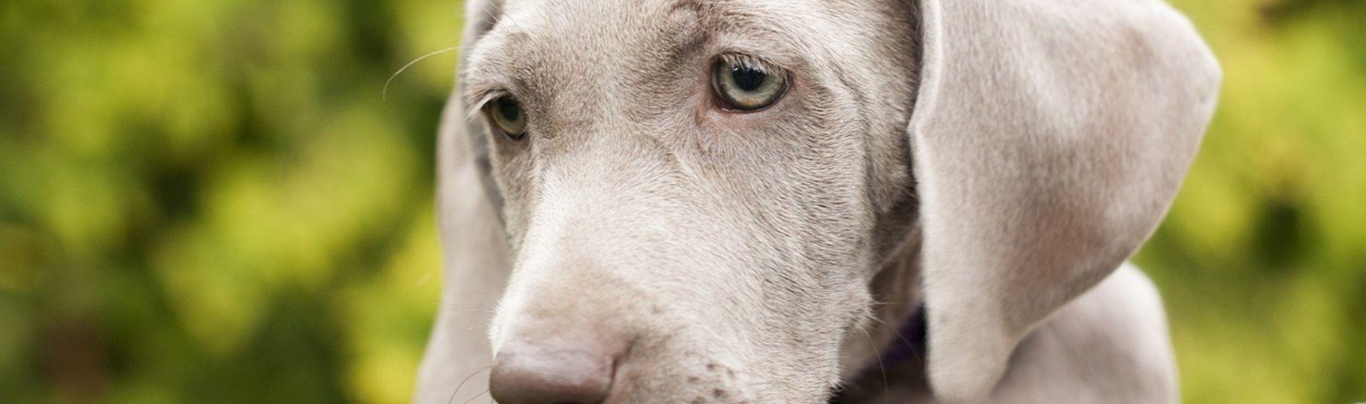 Hundeschule – Zentrum Wolfacademy