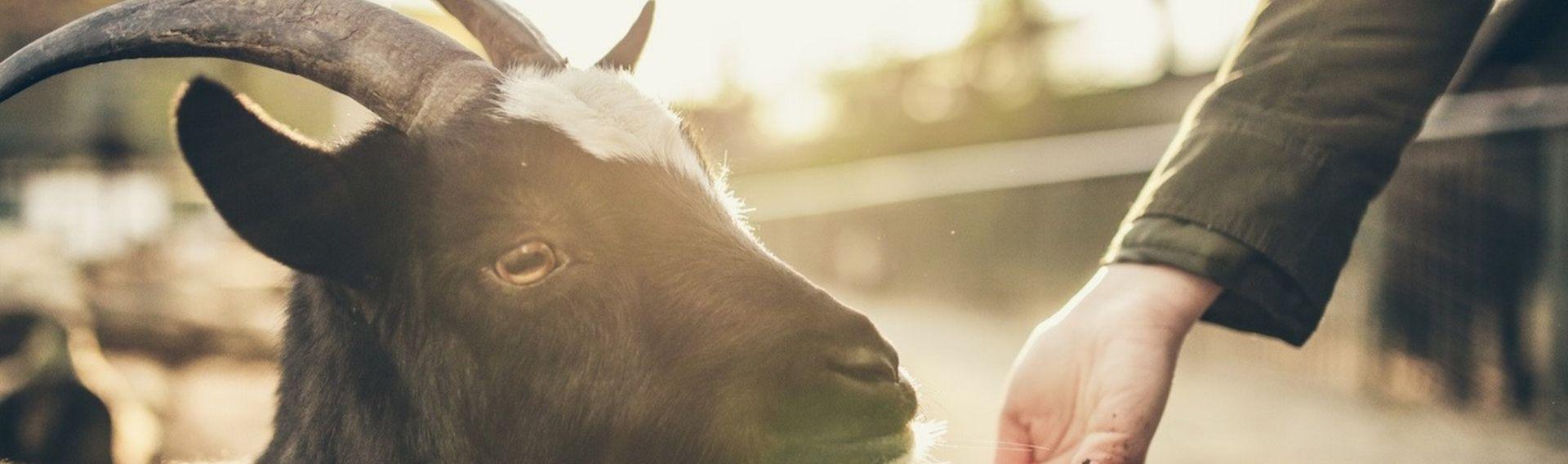 Familienausflug Usedom mit Hund – Tierpark Wolgast
