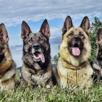 Hundetraining Schäferhundeverein