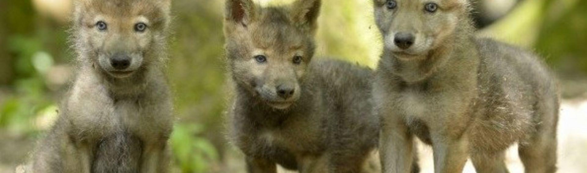 Wolfspark Merzig mit Hund