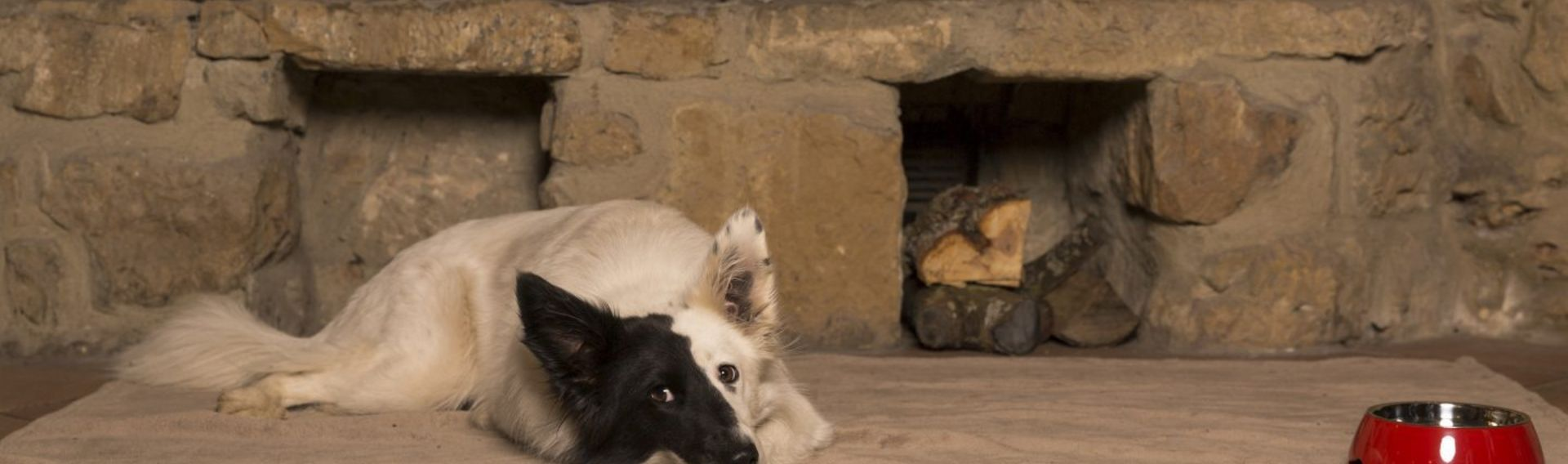 Urlaub mit Hundeschule, Hundepension – MuppenTrupp