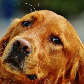 Hundeseminare Obedience Deutschland