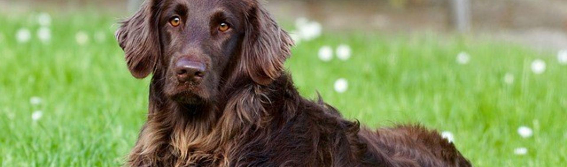Hundetraining im Urlaub oder Freizeit