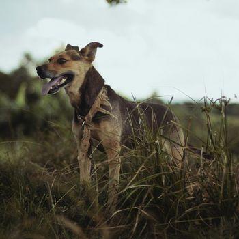 Auslauf für Hund am Pohlsee in Berlin