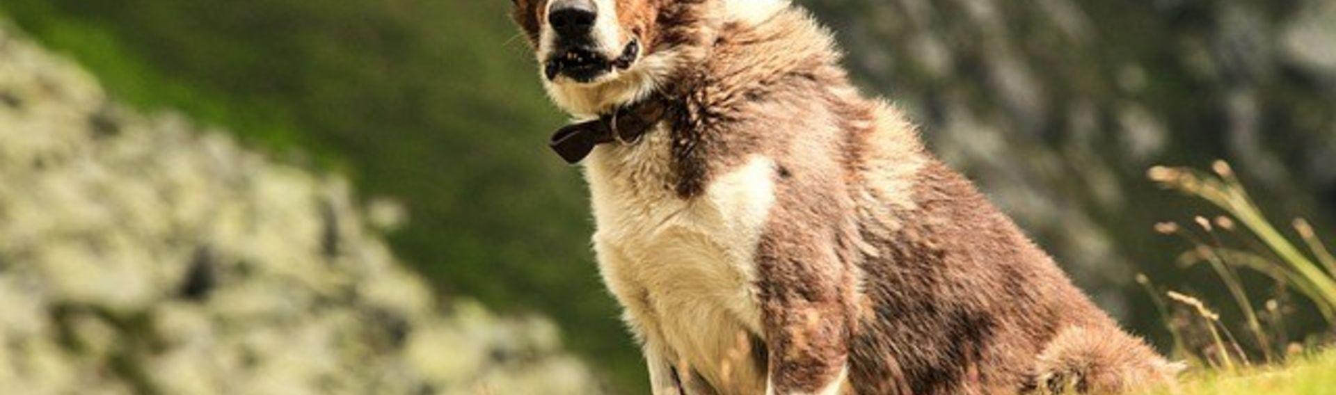 Wandertouren mit Hund – Angebote für Hundehalter