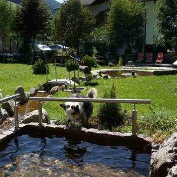 Urlaub mit Hund Südtirol