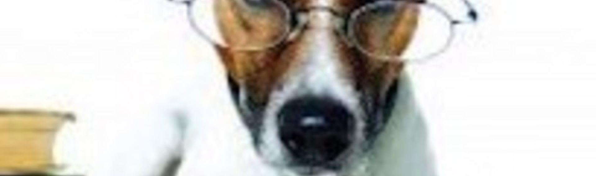 Hundeausstellung Termine