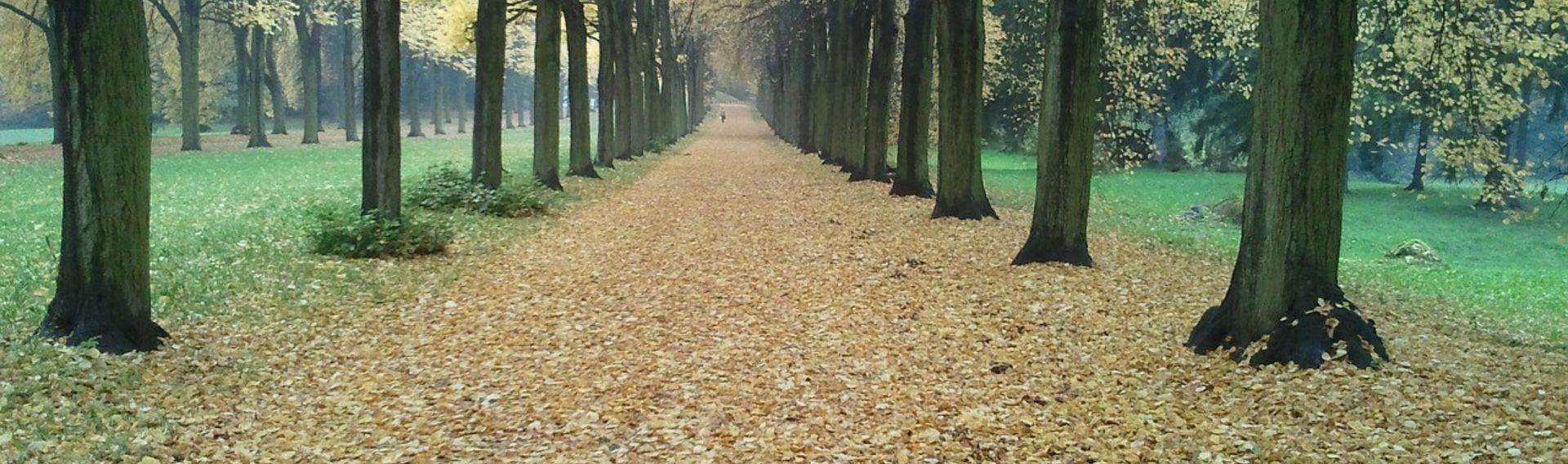 Stadtrundfahrt Potsdam mit Hund