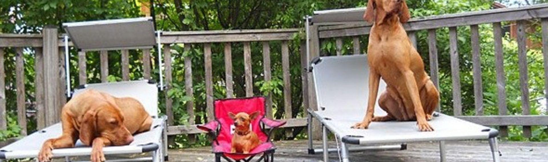 Hundefreundliches Hotel Bayern mit Wellness