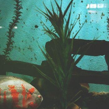 Ausflug Sylt Aquarium