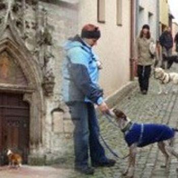 Gruppenreisen mit Hund – ars canis