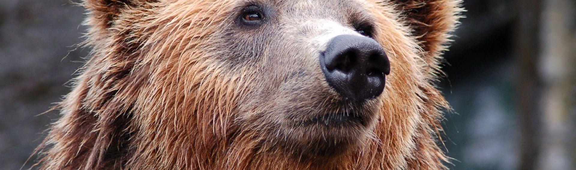 Wolf- und Bärenpark Schwarzwald