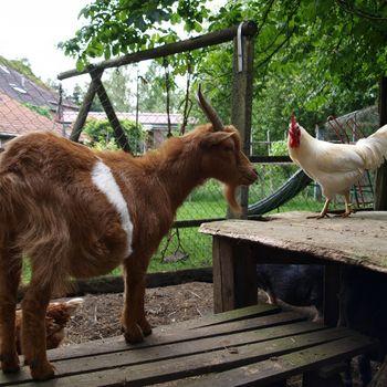 Urlaub auf dem Bauernhof mit Kind und Hund