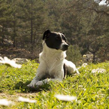 Kleines Hotel Hund erlaubt & willkommen