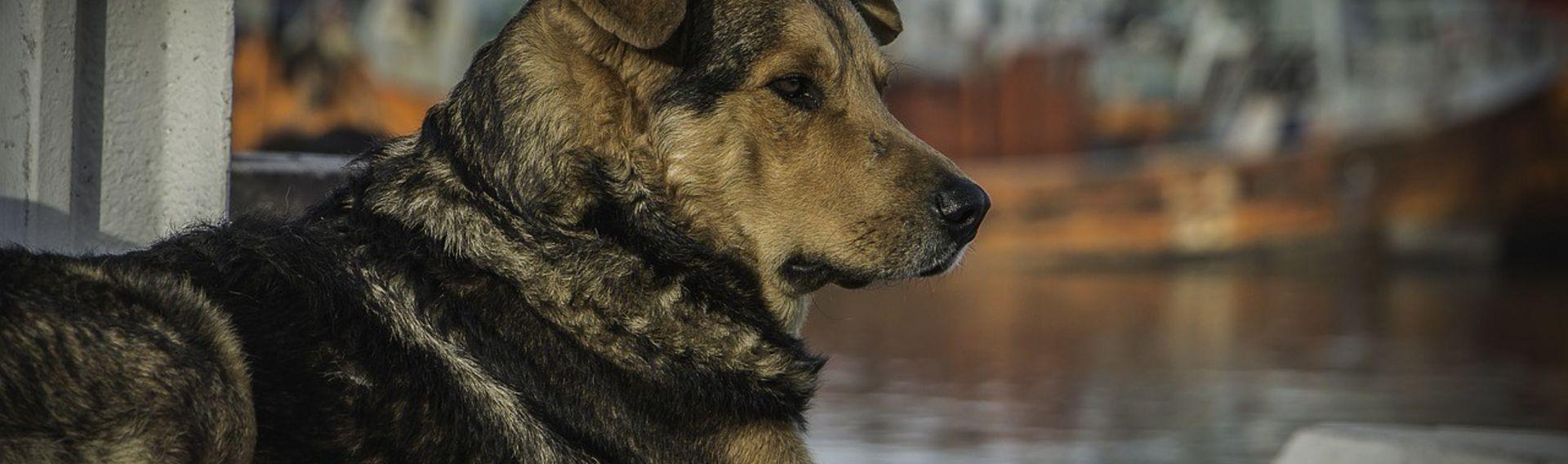 Kanutouren mit Hund – Das Hundekanu