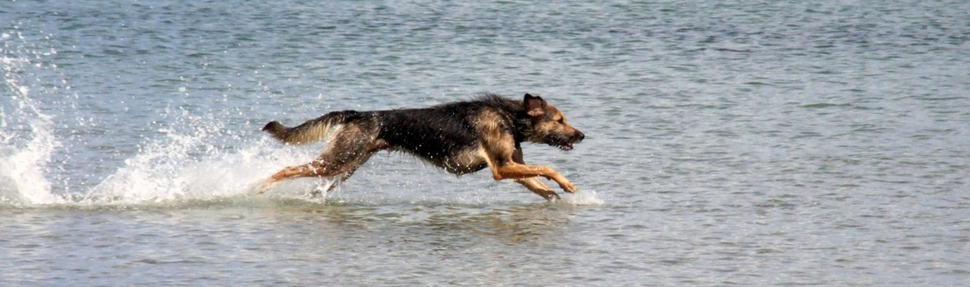 Last-Minute-Urlaub mit Hund