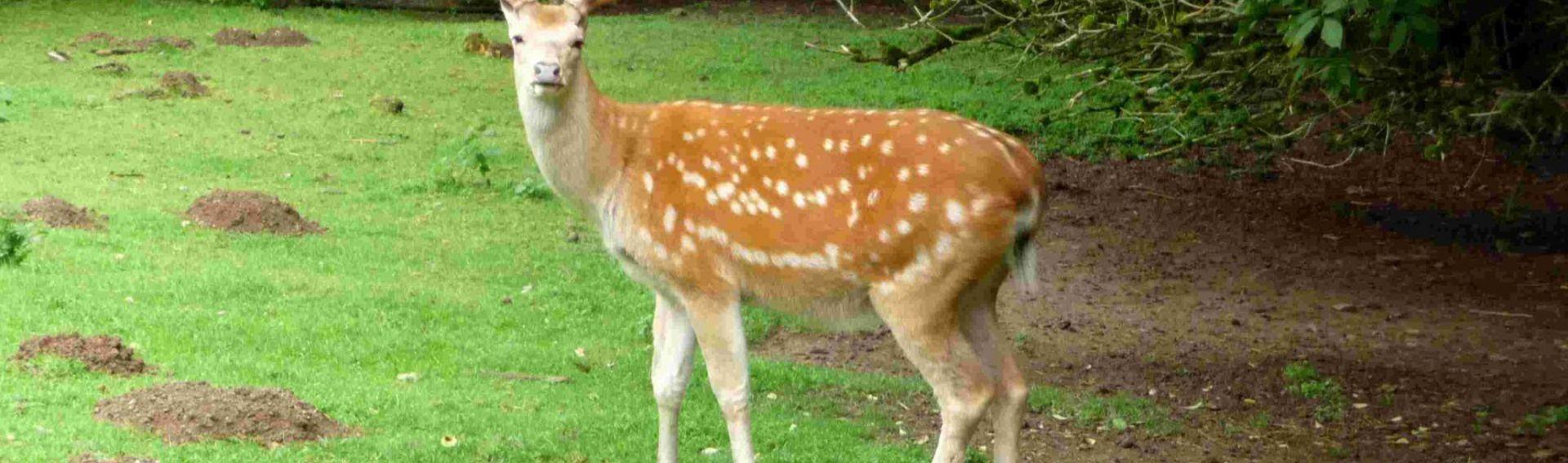 Wildpark Westerwald