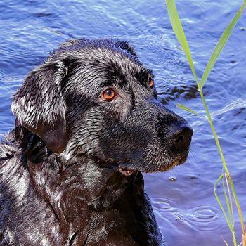 Urlaub mit Hund Brombachsee