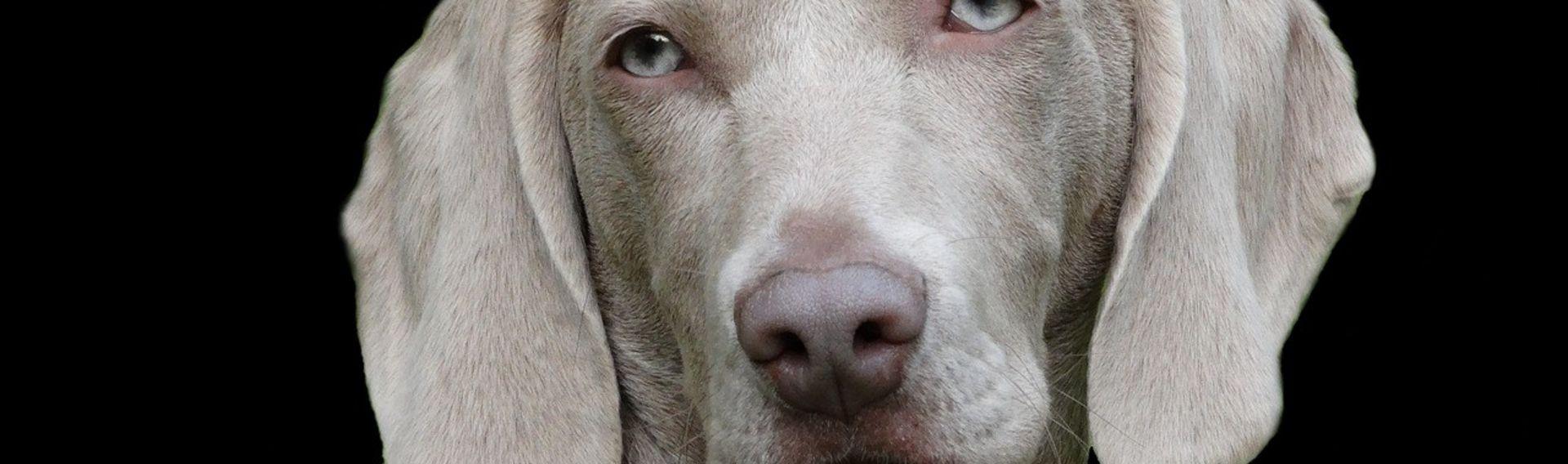 Messe Hund Deutschland 2017 – Heimtier