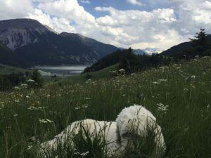 Reschensee mit Hund, Urlaub mit Hund Südtirol