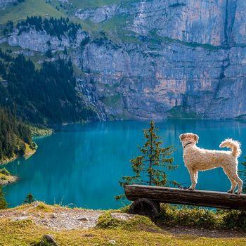 Camping Deutschland mit Hund