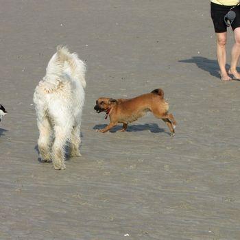 Hundestrand Binz Prora