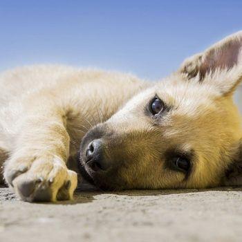 Hundeerziehung Bremen Aumund