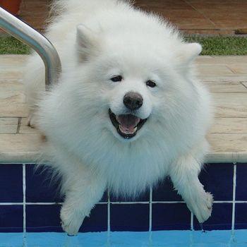 Freibad mit Hund am Saisonende