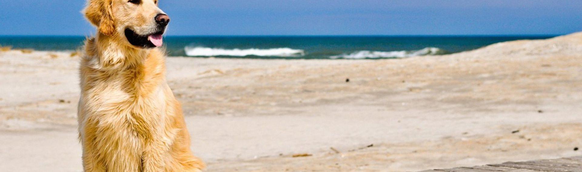 Hundestrände Insel Sylt List