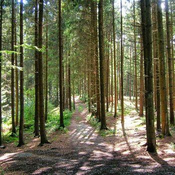 Tierfreigelände Neuschönau Nationalpark