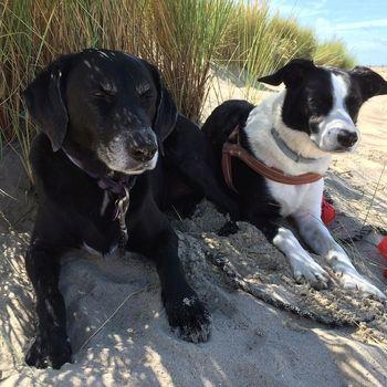Urlaub mit 2 Hunden