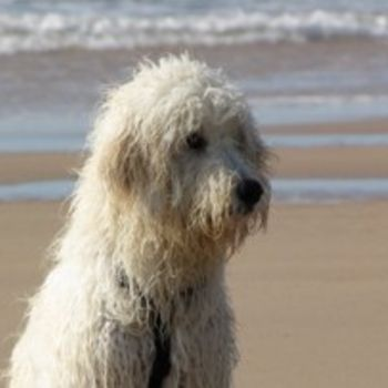 Nordsee Hundestrand Schütting