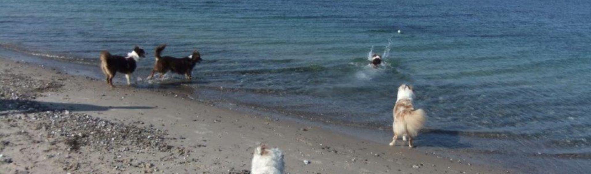 Urlaub mit Hund Insel Fehmarn