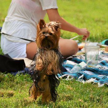 Ausflug mit Hund – Tierpark