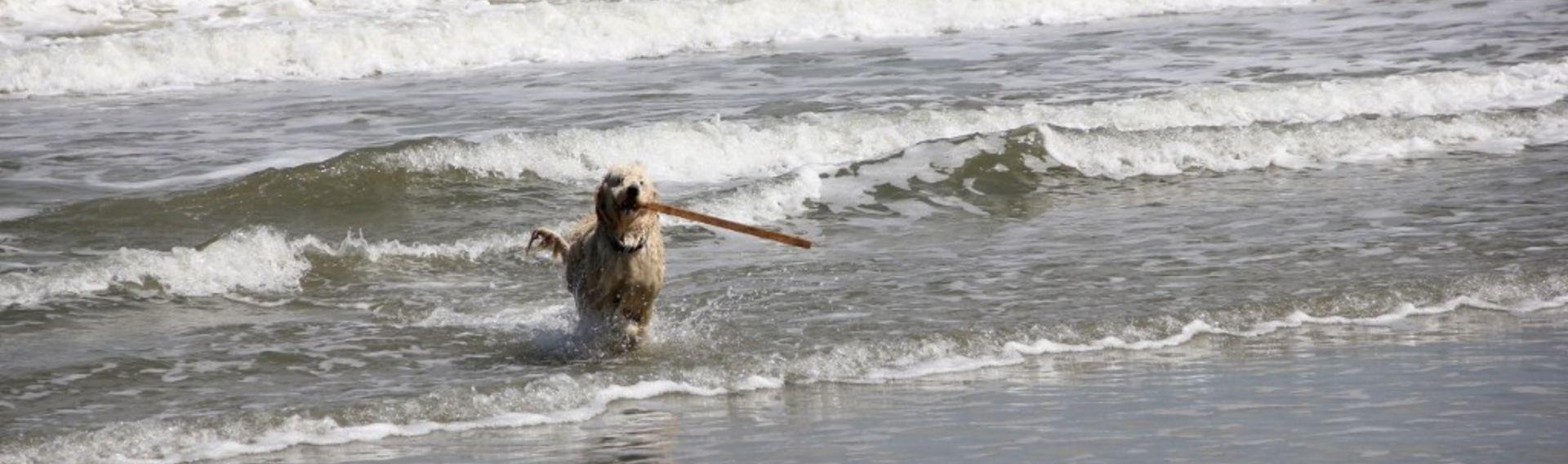 Urlaub Damp mit Hund