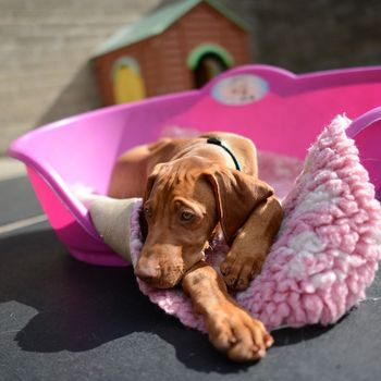 Hundetagesstätte im Pfötchenhotel Deutschland