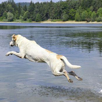 Hundeurlaub Deutschland am See mit Hund
