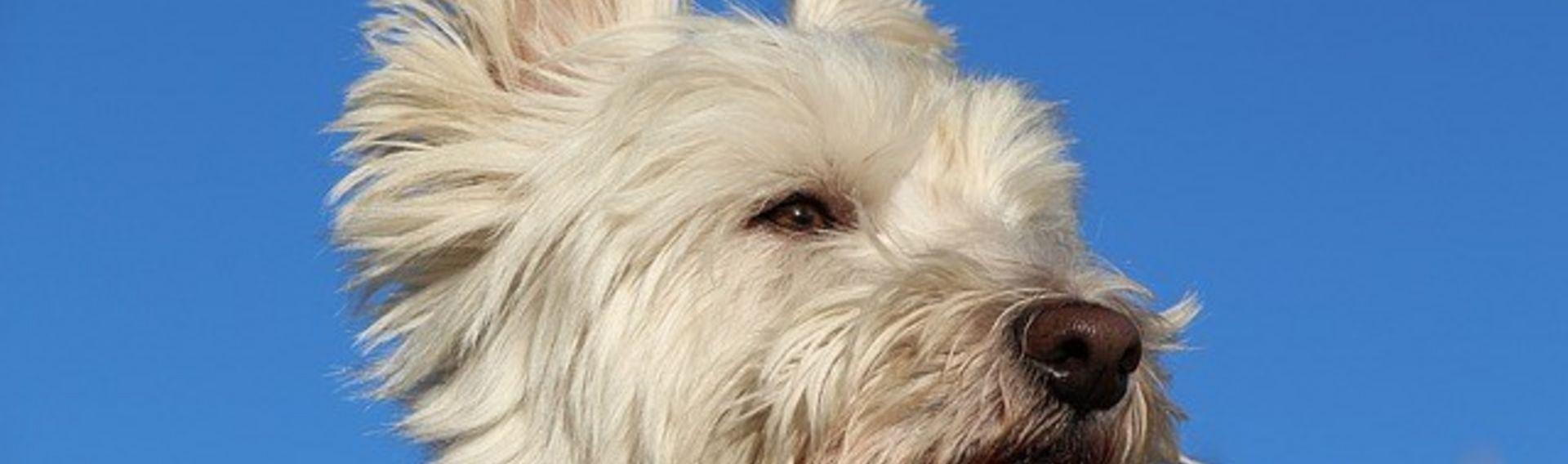 Schwerin mit Hund erleben