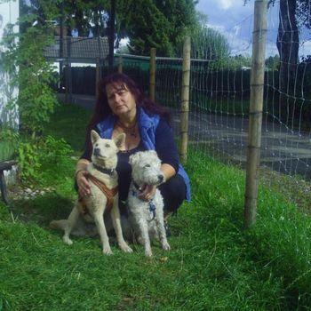 Hundeschule für Angsthunde