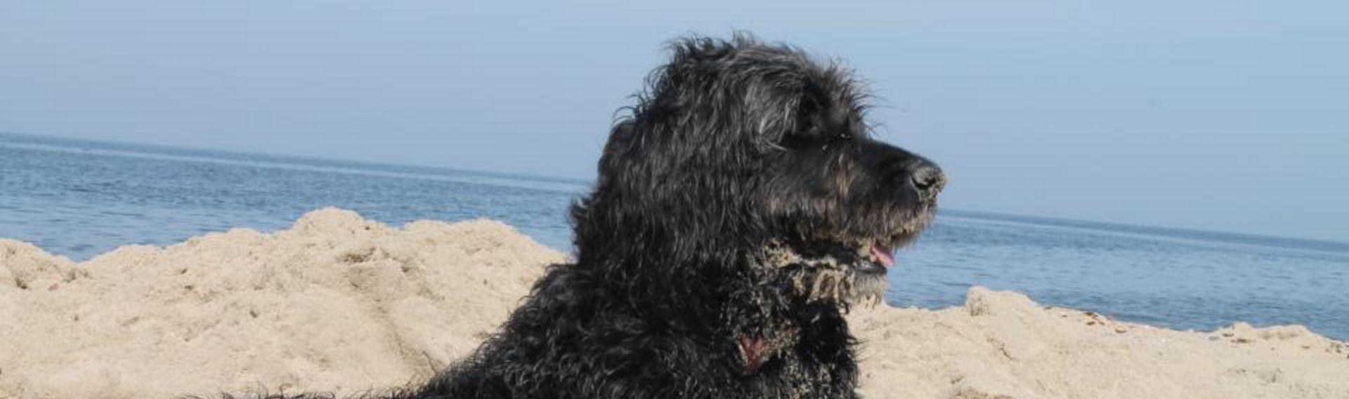 Hundestrand Hörnum