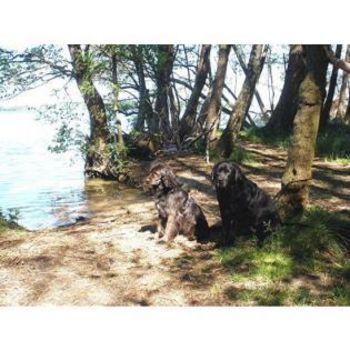 Mecklenburgische Seenplatte Camping mit Hund