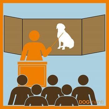 Hundetrainer Ausbildung in Berlin
