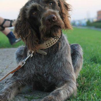 Jagd und Hund Dortmund