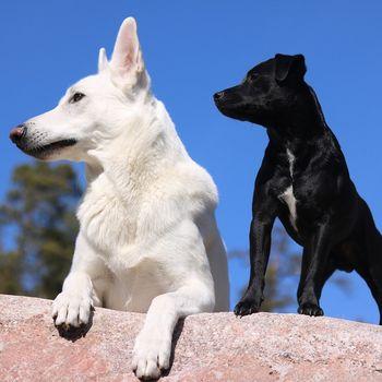 1,2,3 Hund dabei-Urlaub mit Hund im ausbruchsicheren Ferienhaus in fast Alleinlage