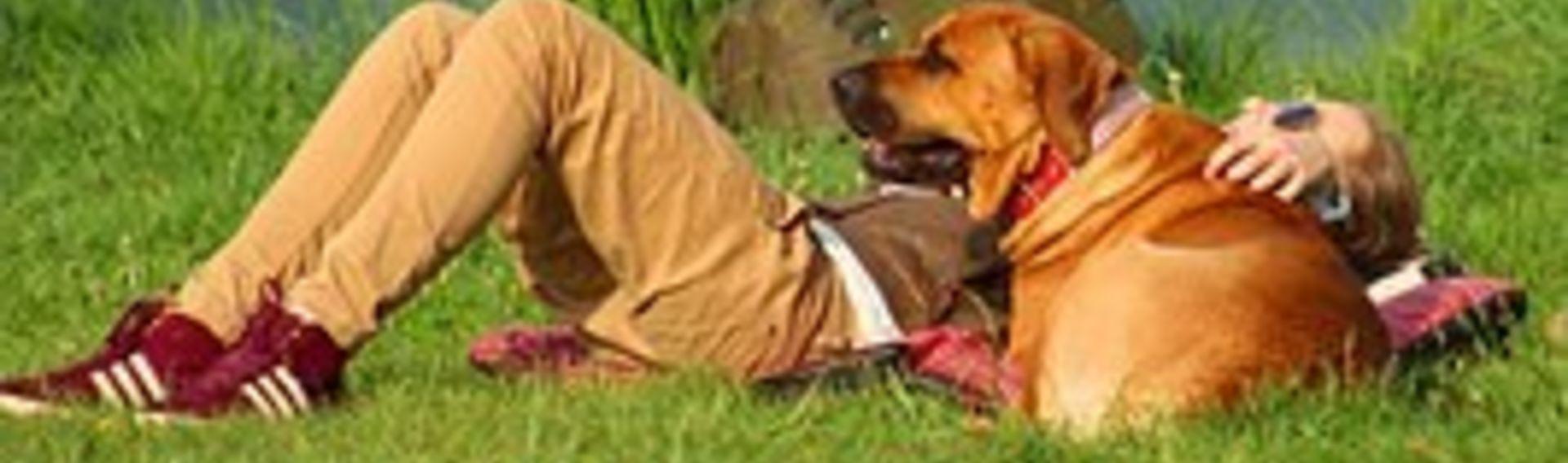 Pellworm mit Hund Badestelle Hooger Fähre