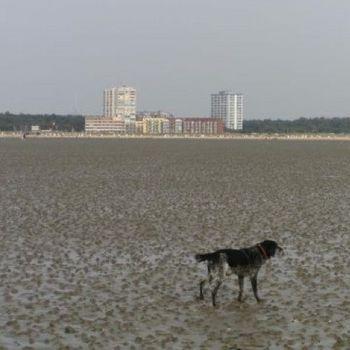 Ferienwohnung mit Hallenbad Cuxhaven am Sandstrand
